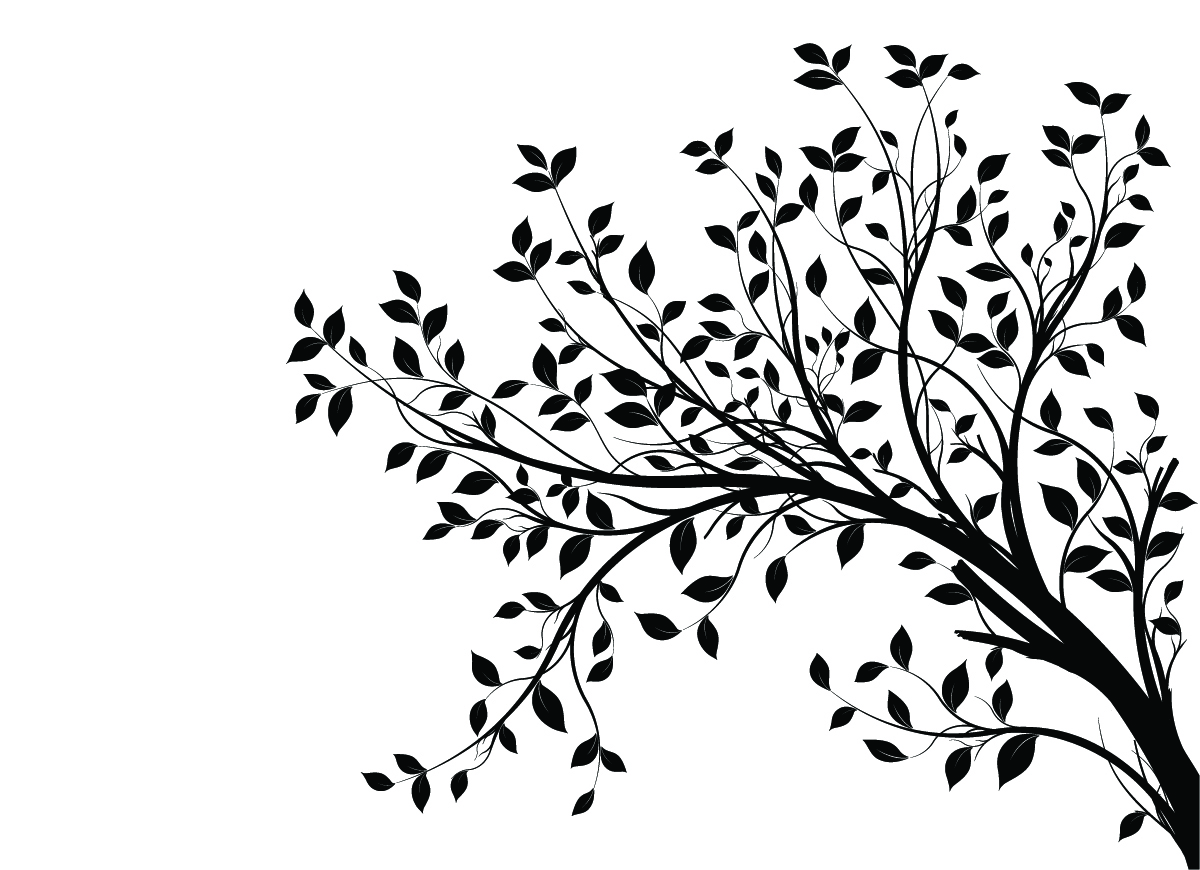 tree branches silhouette png wwwpixsharkcom images